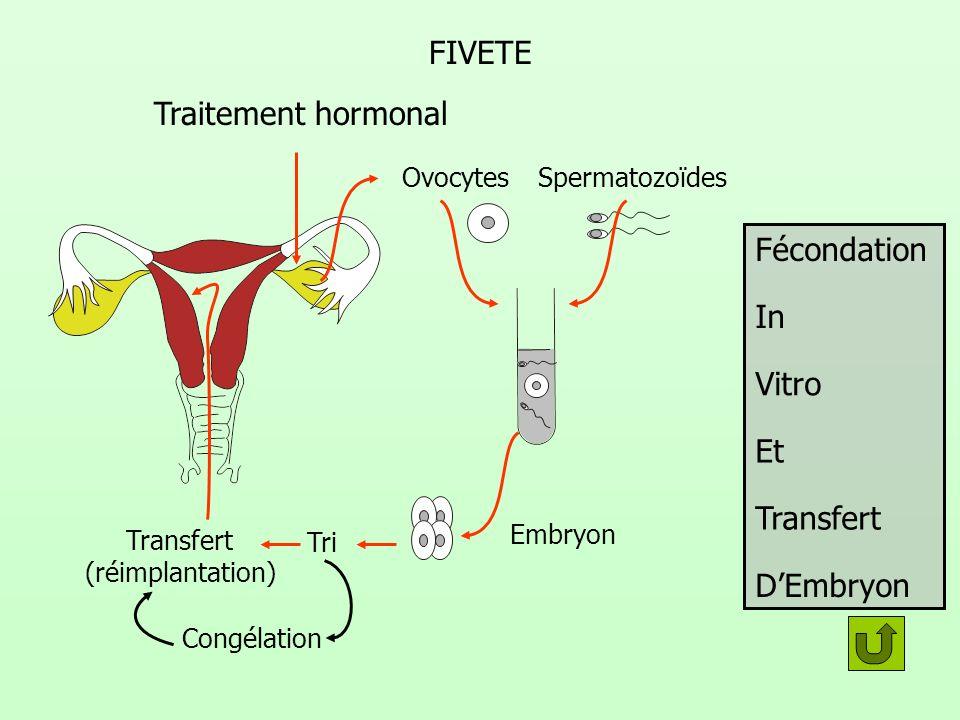 FIVETE Fécondation In Vitro Et Transfert DEmbryon Traitement hormonal OvocytesSpermatozoïdes Embryon Tri Transfert (réimplantation) Congélation