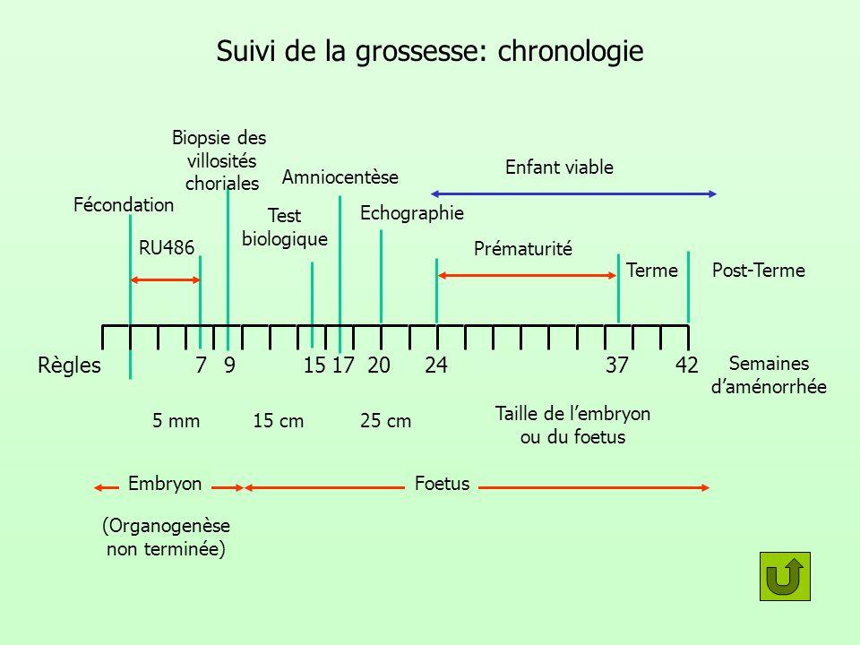 Suivi de la grossesse: chronologie Fécondation Règles RU486 Biopsie des villosités choriales Test biologique Amniocentèse Echographie Prématurité Term