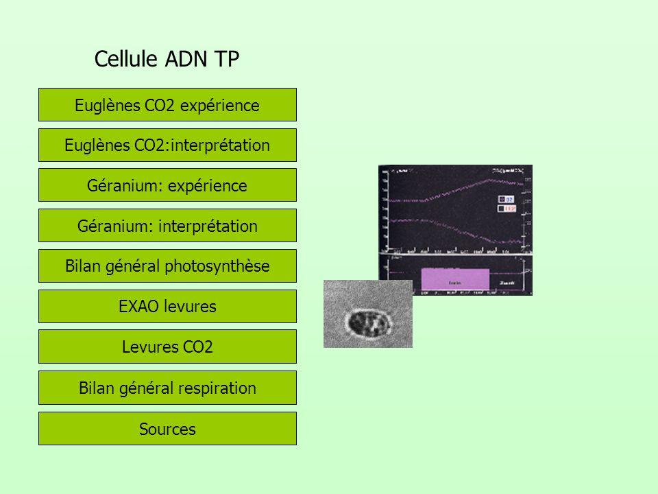 Cellule ADN TP Euglènes CO2:interprétation Euglènes CO2 expérience Géranium: expérience Géranium: interprétation Bilan général photosynthèse Levures CO2 EXAO levures Sources Bilan général respiration