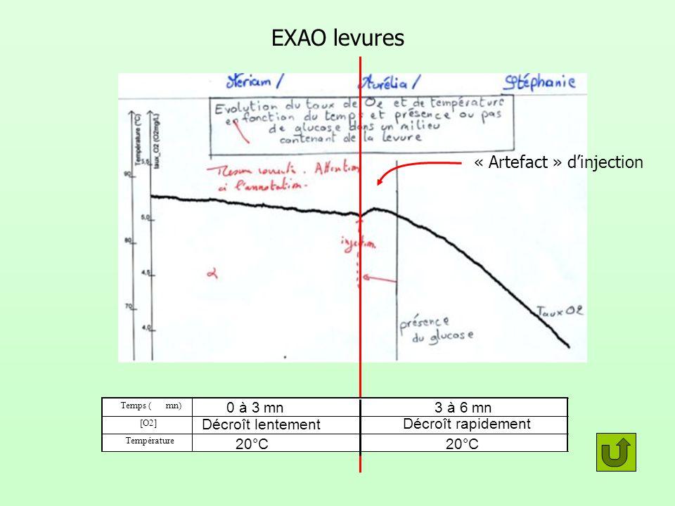 EXAO levures Temps (mn) Température [O2] 0 à 3 mn3 à 6 mn 20°C Décroît lentement Décroît rapidement « Artefact » dinjection