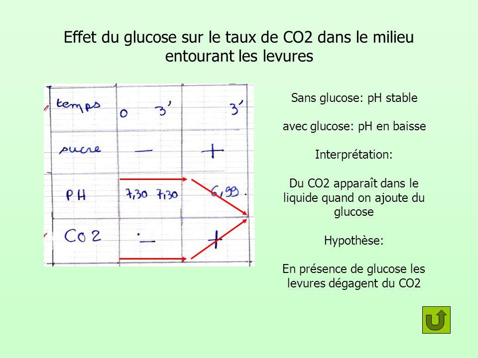Effet du glucose sur le taux de CO2 dans le milieu entourant les levures Sans glucose: pH stable avec glucose: pH en baisse Interprétation: Du CO2 apparaît dans le liquide quand on ajoute du glucose Hypothèse: En présence de glucose les levures dégagent du CO2