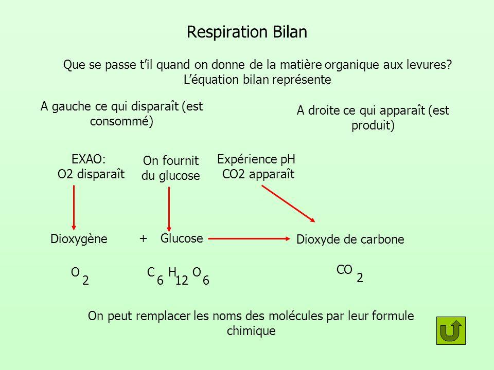 Respiration Bilan Que se passe til quand on donne de la matière organique aux levures? Léquation bilan représente A gauche ce qui disparaît (est conso