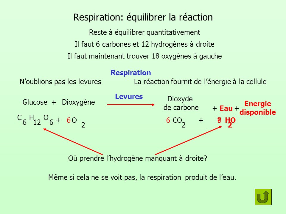 Respiration: équilibrer la réaction 66 Où prendre lhydrogène manquant à droite? Même si cela ne se voit pas, la respiration produit de leau. 6 Reste à