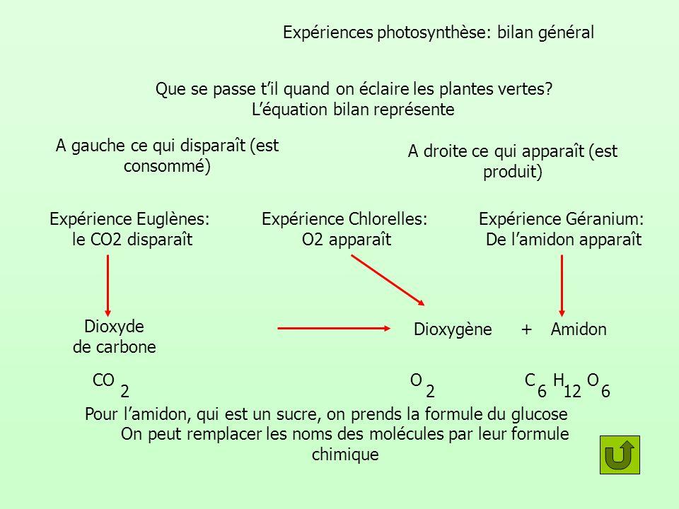 Expériences photosynthèse: bilan général Que se passe til quand on éclaire les plantes vertes? Léquation bilan représente A gauche ce qui disparaît (e