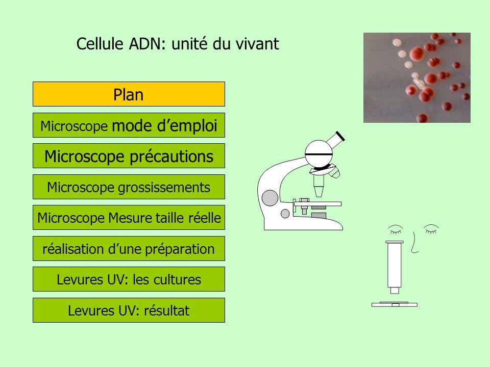 Cellule ADN: unité du vivant Microscope mode demploi Plan Microscope précautions Microscope grossissements Microscope Mesure taille réelle réalisation