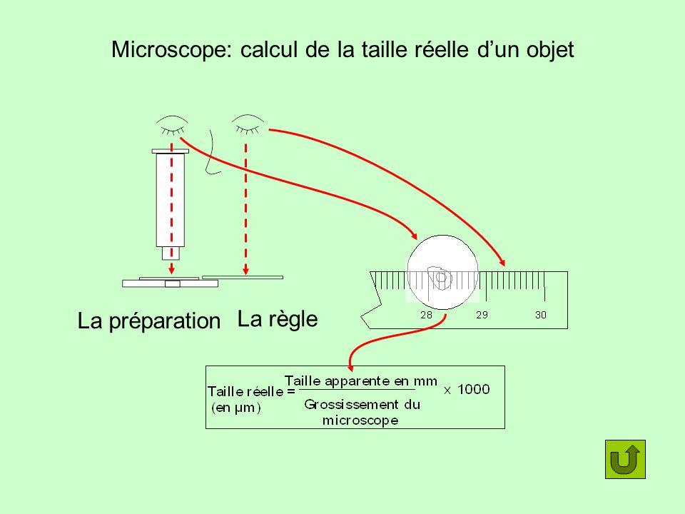 Microscope: calcul de la taille réelle dun objet La préparation La règle