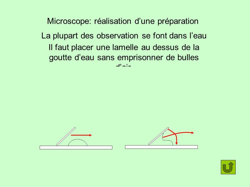 Microscope: réalisation dune préparation La plupart des observation se font dans leau Il faut placer une lamelle au dessus de la goutte deau sans empr
