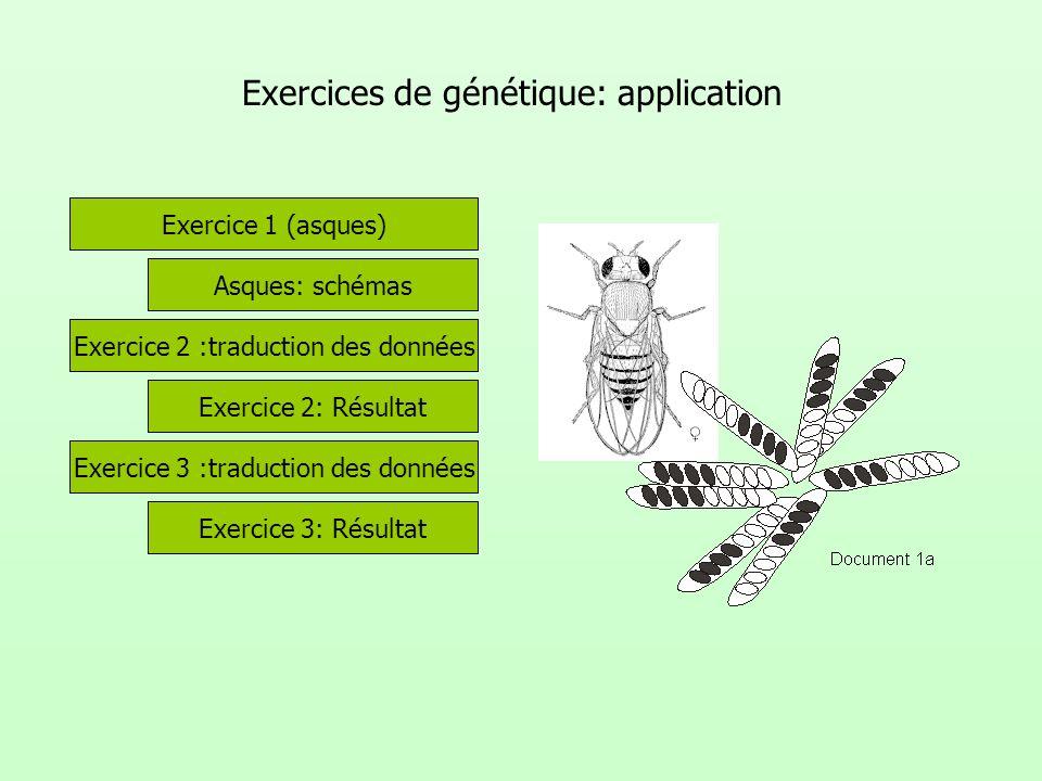 Exercices de génétique: application Exercice 2 :traduction des données Exercice 1 (asques) Exercice 2: Résultat Exercice 3 :traduction des données Exe