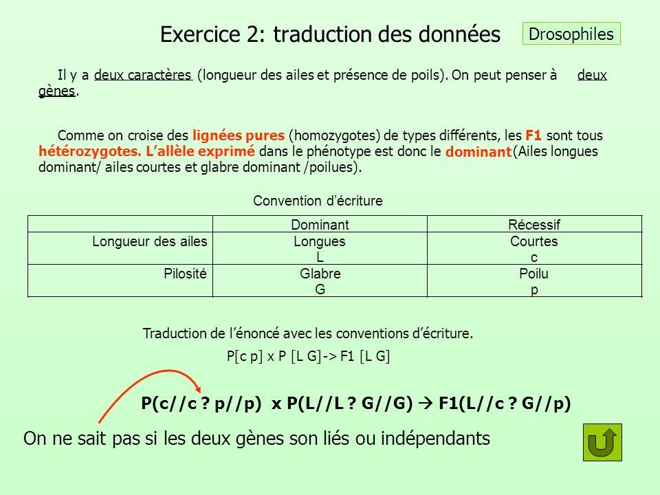 Exercice 2: traduction des données Il y adeux caractères (longueur des ailes et présence de poils). On peut penser àdeux gènes. Comme on croise des li