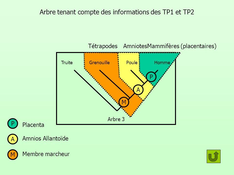 TétrapodesAmniotes Mammifères (placentaires) Arbre tenant compte des informations des TP1 et TP2 GrenouillePouleTruite Arbre 3 M Membre marcheur P Pla