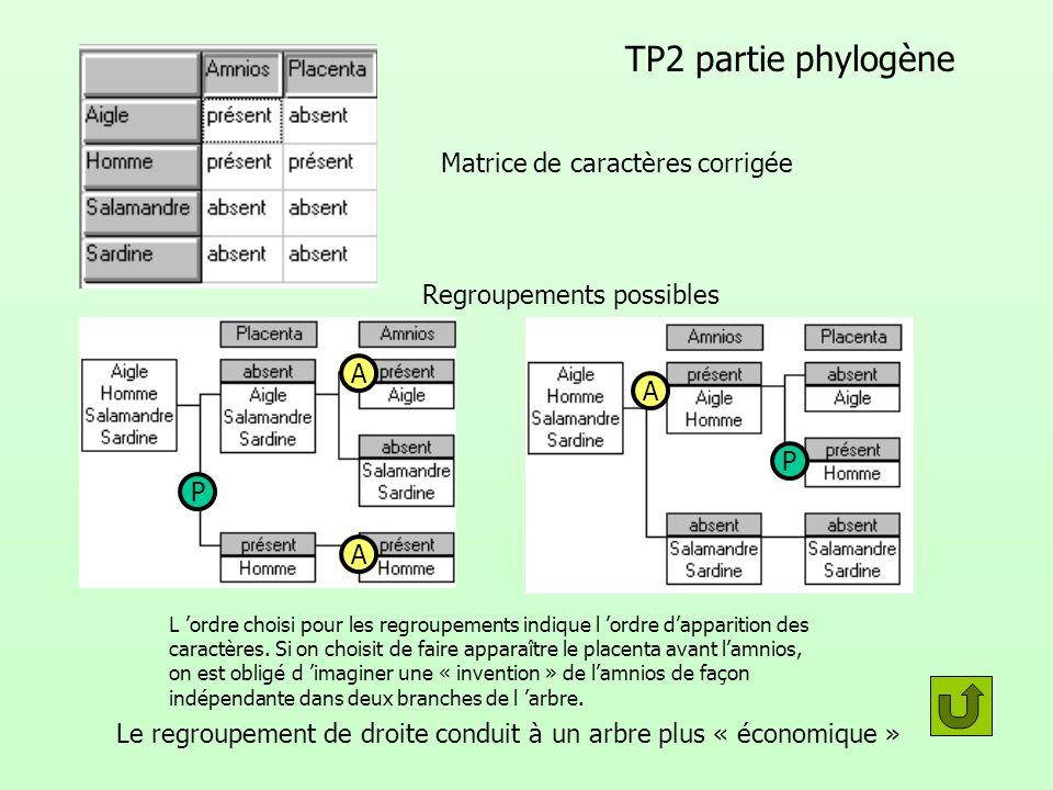 TP2 partie phylogène Matrice de caractères corrigée Regroupements possibles L ordre choisi pour les regroupements indique l ordre dapparition des cara