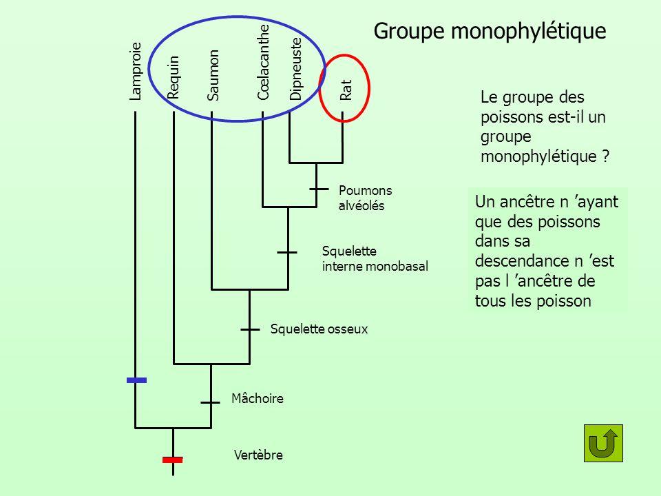 Groupe monophylétique Lamproie Requin Saumon Cœlacanthe DipneusteRat Poumons alvéolés Squelette interne monobasal Squelette osseux Mâchoire Vertèbre L