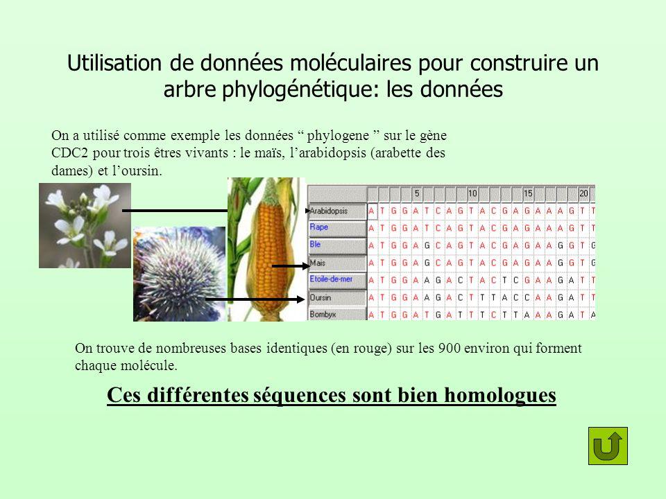Utilisation de données moléculaires pour construire un arbre phylogénétique: les données On a utilisé comme exemple les données phylogene sur le gène
