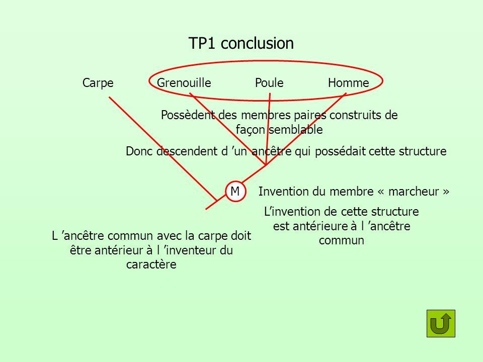 TP1 conclusion GrenouillePouleHomme Donc descendent d un ancêtre qui possédait cette structure Linvention de cette structure est antérieure à l ancêtr