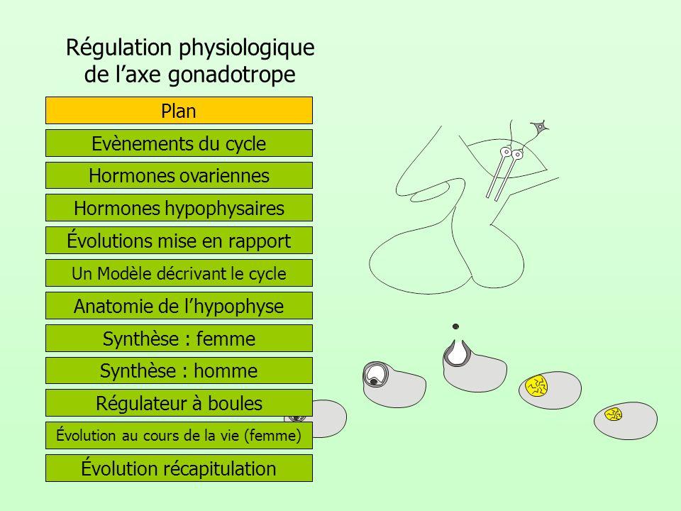 Régulation physiologique de laxe gonadotrope Hormones ovariennes Evènements du cycle Hormones hypophysaires Évolutions mise en rapport Plan Anatomie d