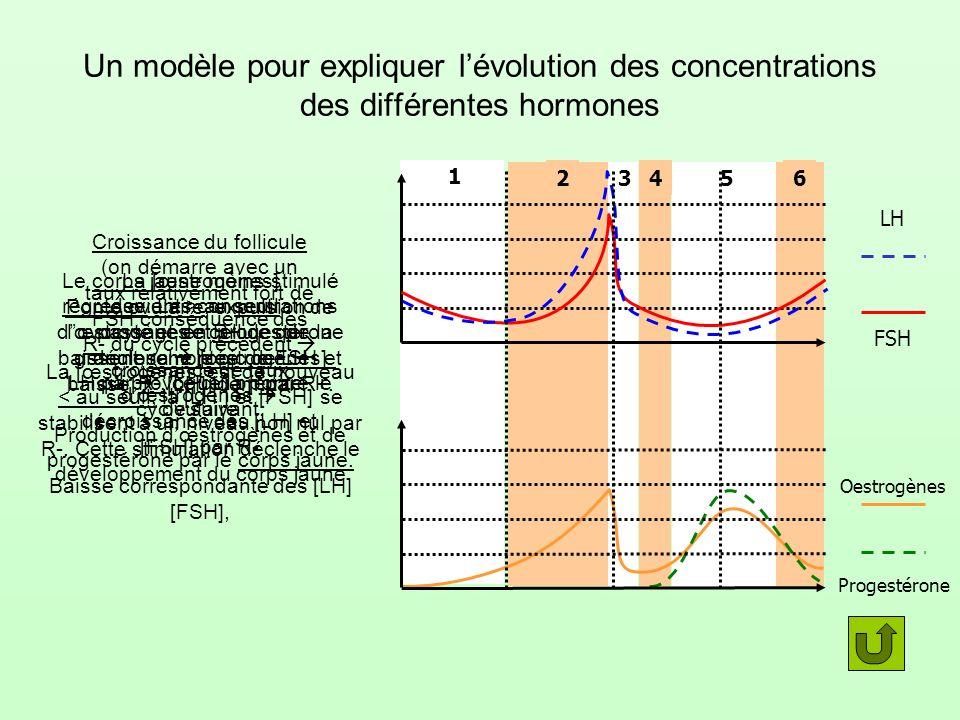 65432 1 Un modèle pour expliquer lévolution des concentrations des différentes hormones Croissance du follicule (on démarre avec un taux relativement