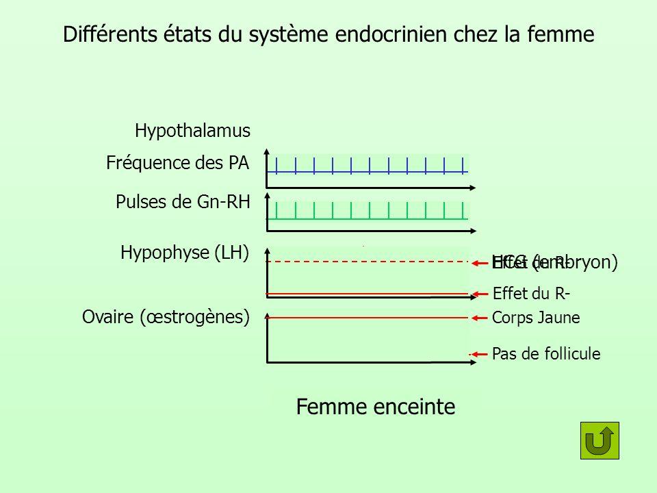 Différents états du système endocrinien chez la femme Hypothalamus Hypophyse (LH) Ovaire (œstrogènes) Fréquence des PA Pulses de Gn-RH HCG (embryon) C