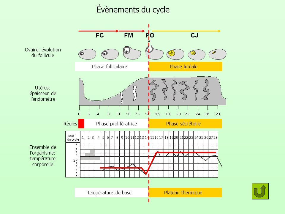 Évènements du cycle Ovaire: évolution du follicule Utérus: épaisseur de lendomètre 37° 1 2 3 4 5 6 7 8 9 123456789101112131415161718192021222324252627