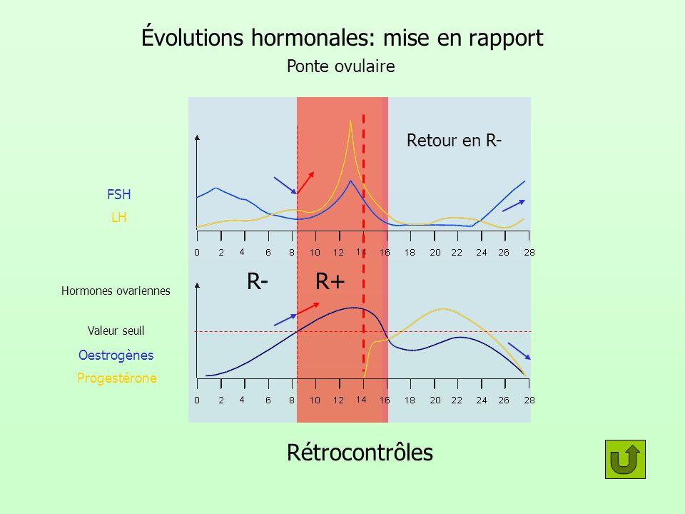Retour en R- Évolutions hormonales: mise en rapport FSH LH Hormones ovariennes Oestrogènes Progestérone Ponte ovulaire Rétrocontrôles R+R- Valeur seui