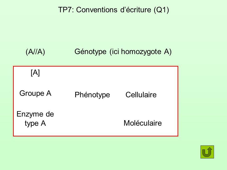 TP7: Conventions décriture (Q1) (A//A) Génotype (ici homozygote A) Phénotype [A] Groupe A Enzyme de type A Cellulaire Moléculaire