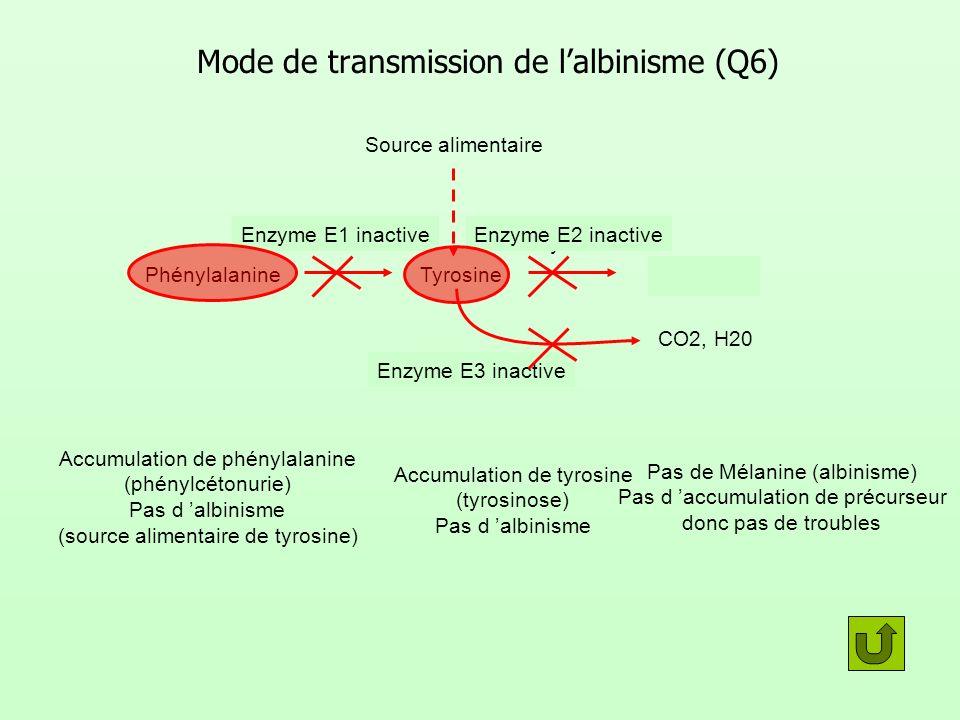 Mode de transmission de lalbinisme (Q6) PhénylalanineTyrosineMélanine CO2, H20 Enzyme E1 Enzyme E2 Enzyme E3 Enzyme E2 inactive Pas de Mélanine (albin