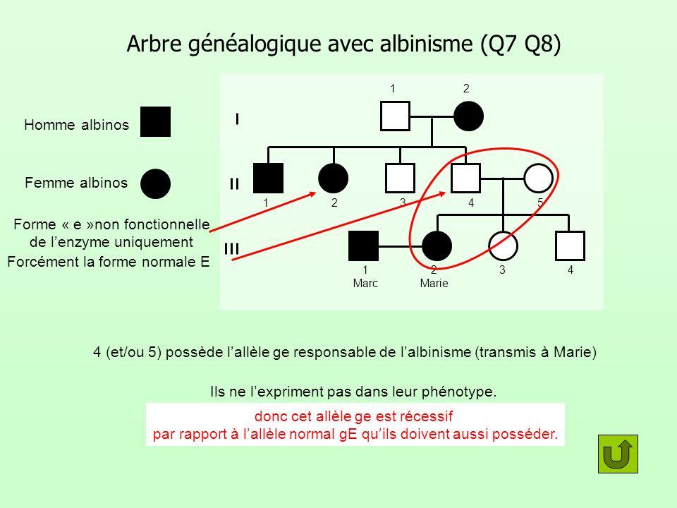Arbre généalogique avec albinisme (Q7 Q8) Homme albinos Femme albinos 12 12345 1 Marc 2 Marie 34 4 (et/ou 5) possède lallèle ge responsable de lalbini