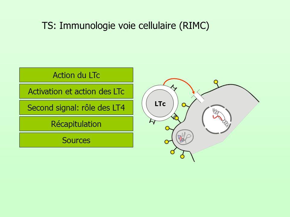 TS: Immunologie voie cellulaire (RIMC) Activation et action des LTc Second signal: rôle des LT4 Récapitulation Sources Action du LTc LTc