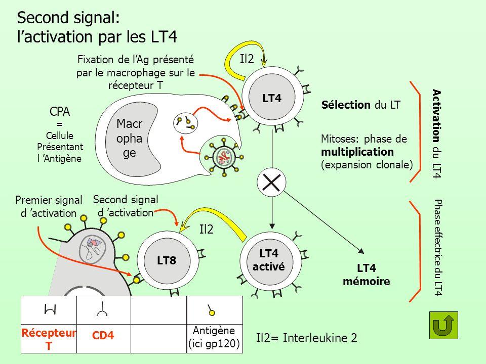 Voie cellulaire (élimination dun Ag dans le milieu intracellulaire) : récapitulation