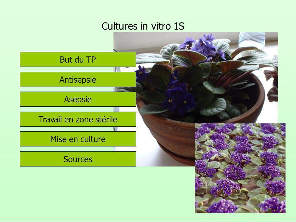 Cultures in vitro 1S But du TP Antisepsie Asepsie Travail en zone stérile Mise en culture Sources