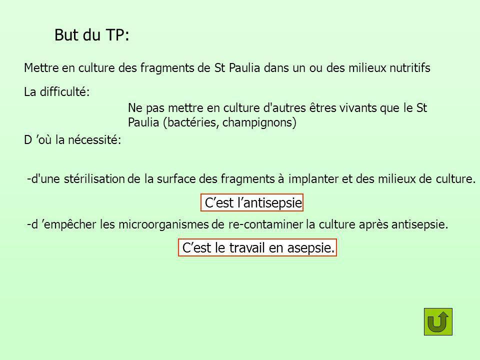 But du TP: Mettre en culture des fragments de St Paulia dans un ou des milieux nutritifs La difficulté: Ne pas mettre en culture d'autres êtres vivant