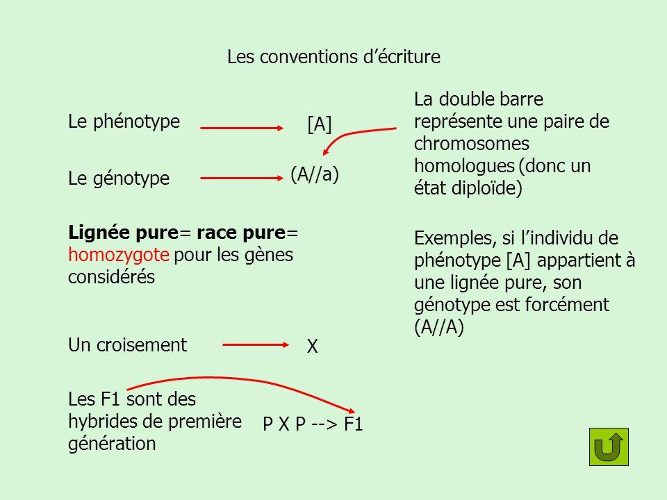 Léchiquier de croisement Résultat du croisement de deux lignées pures [A] x [a] Les génotypes sont forcément (A//A) x (a//a)F1 En colonne les gamètes produits par un des parents En ligne les gamètes produits par lautre parent Léchiquier de croisement permet de trouver le génotype des produits A a (A//a) Les cases du tableau représentent le résultat de la fécondation (les zygotes correspondant aux F1) 100% des zygotes de génotype (A//a) Donc 100% de phénotype [A] Résultat: (A//a)