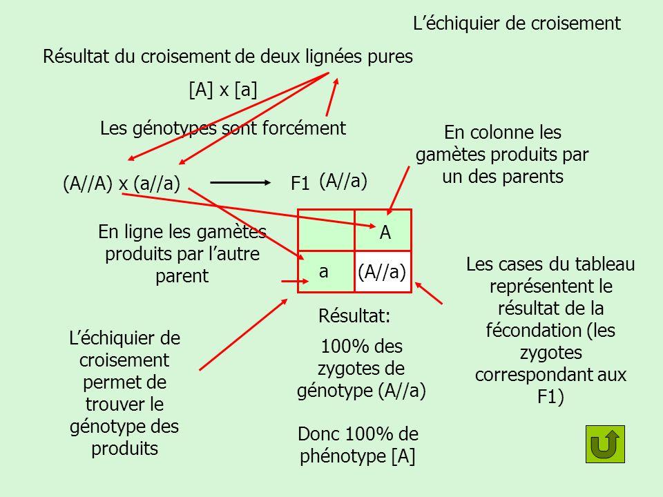 Cas dun gène représenté par un couple dallèles Individu [A] Quel est sont génotype .