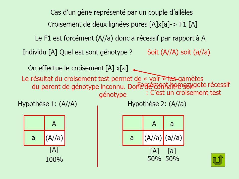 Gènes liés gènes indépendants Mais les deux gènes sont-ils liés ou indépendants.