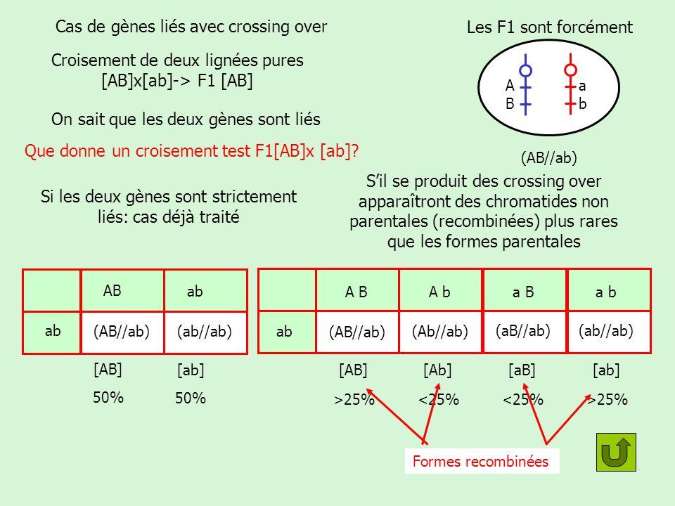 Cas de deux gènes: bilan Si les deux gènes sont strictement liés (= proches sur le chromosome) Résultat du croisement test Les proportions sont en 50/50 comme dans le cas dun seul gène Si les deux gènes sont liés mais quil y a des crossing over (les deux locus sont plus loin lun de lautre sur le chromosome).