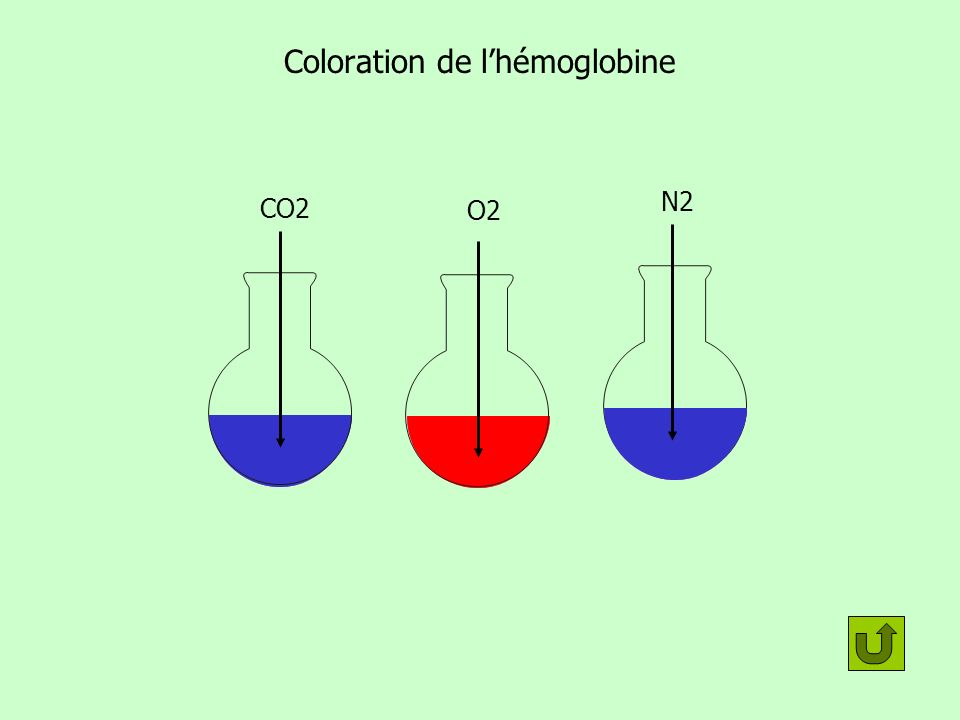 Coloration de lhémoglobine O2 CO2 N2