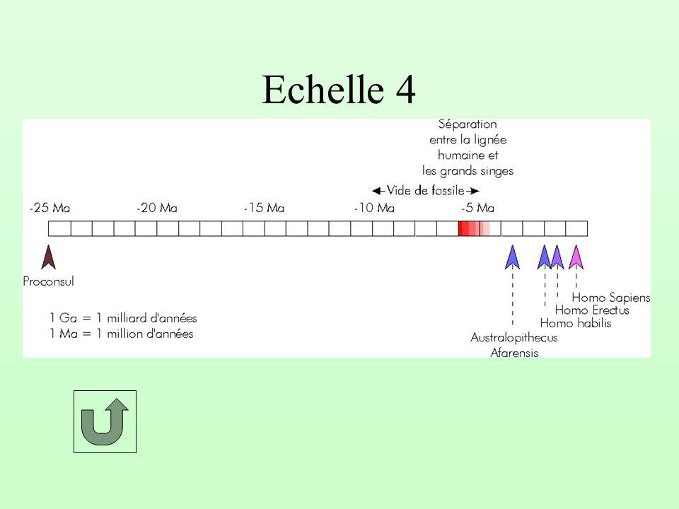 Echelle 3