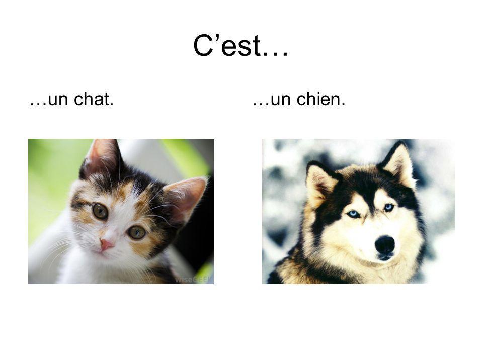 Cest… …un chat.…un chien.