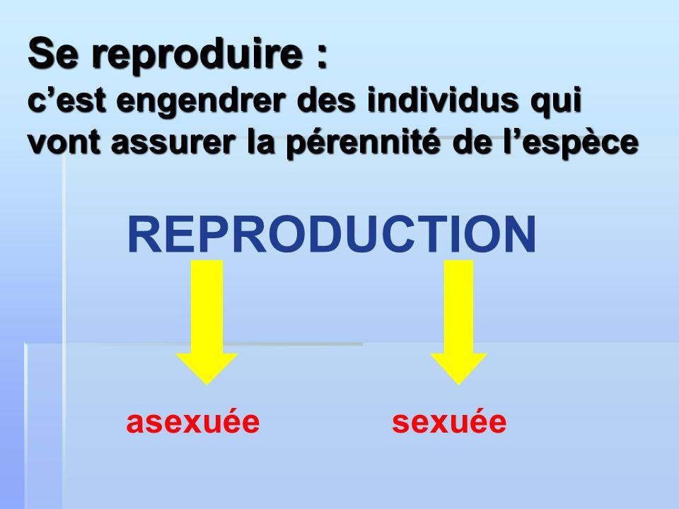 Se reproduire : cest engendrer des individus qui vont assurer la pérennité de lespèce asexuéesexuée REPRODUCTION