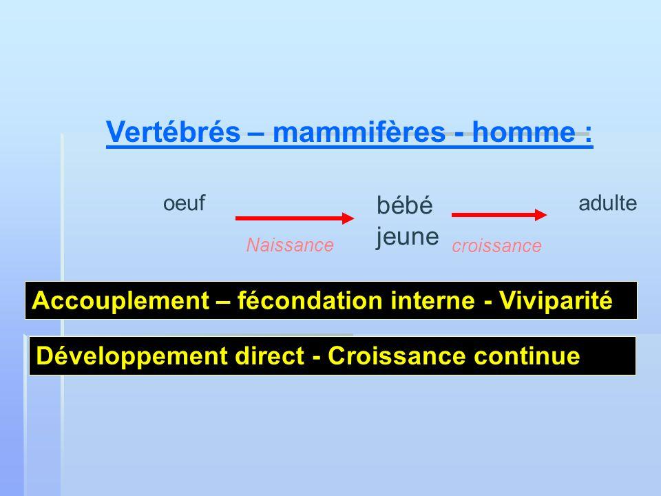 Vertébrés – mammifères - homme : oeuf bébé jeune adulte Naissance croissance Développement direct - Croissance continue Accouplement – fécondation int