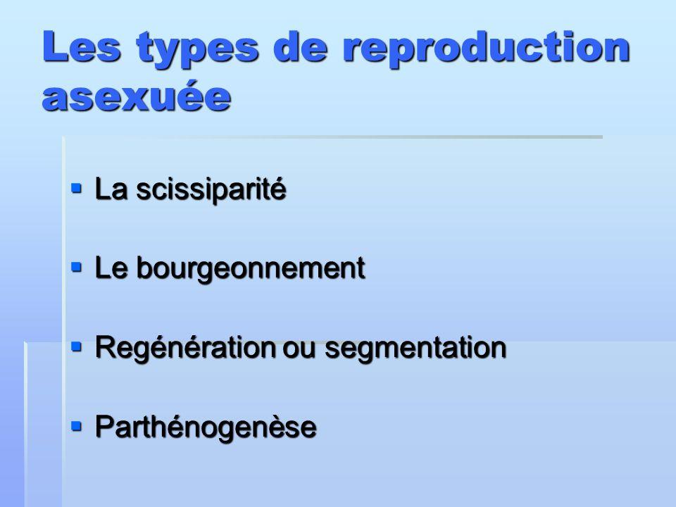 Les types de reproduction asexuée La scissiparité La scissiparité Le bourgeonnement Le bourgeonnement Regénération ou segmentation Regénération ou seg