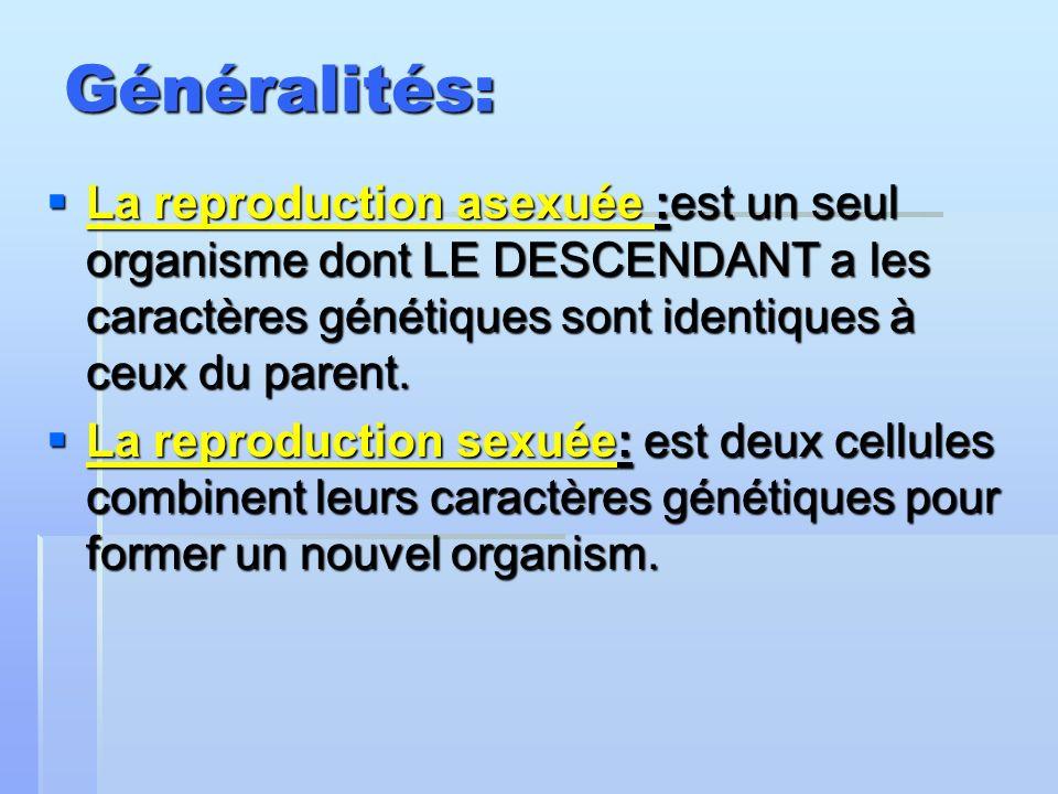 Généralités: La reproduction asexuée :est un seul organisme dont LE DESCENDANT a les caractères génétiques sont identiques à ceux du parent. La reprod