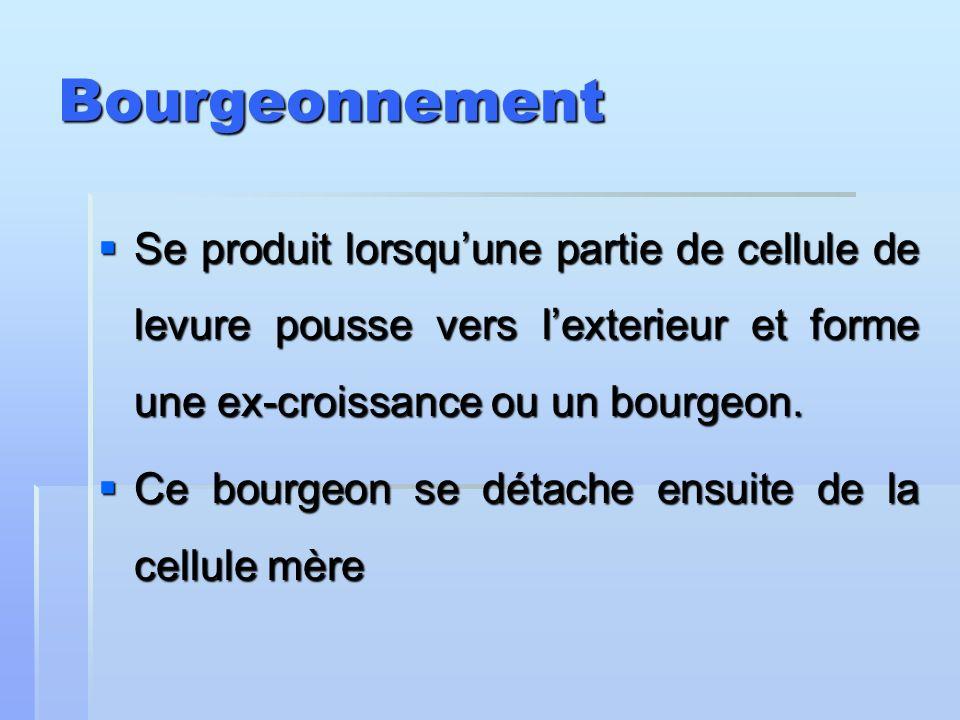 Bourgeonnement Se produit lorsquune partie de cellule de levure pousse vers lexterieur et forme une ex-croissance ou un bourgeon. Se produit lorsquune