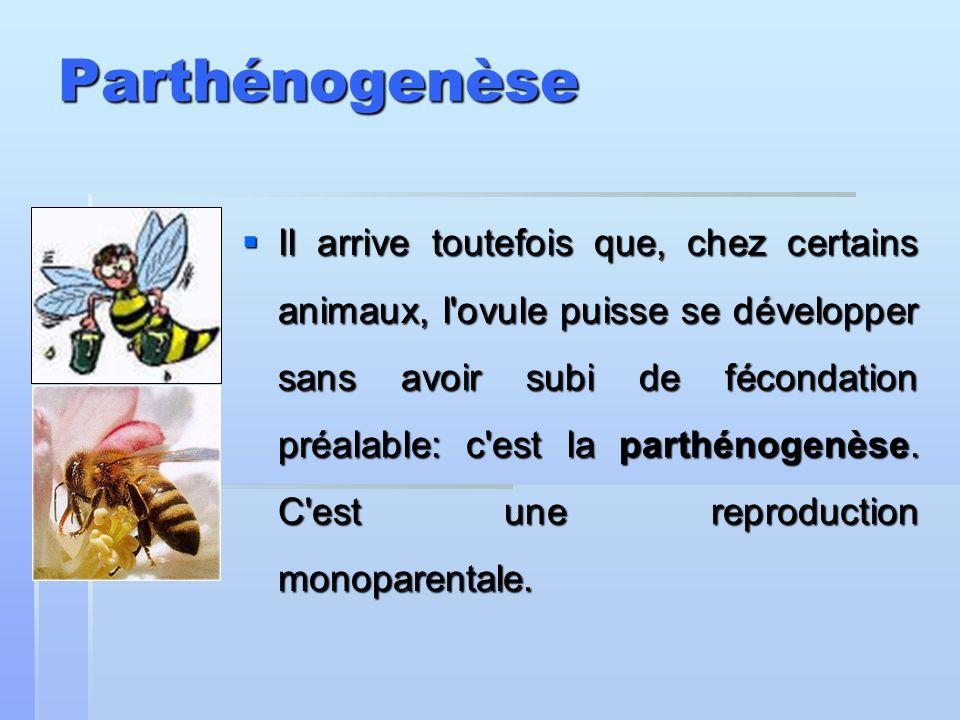 Parthénogenèse Il arrive toutefois que, chez certains animaux, l'ovule puisse se développer sans avoir subi de fécondation préalable: c'est la parthén