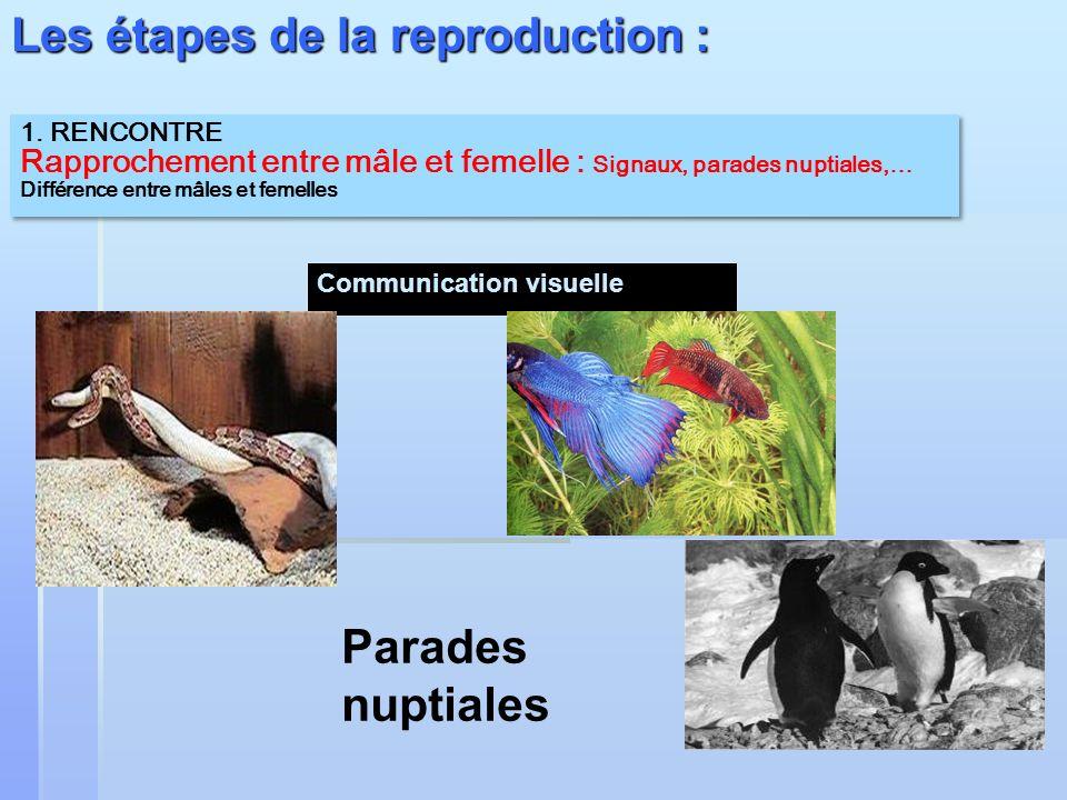 1. RENCONTRE Rapprochement entre mâle et femelle : Signaux, parades nuptiales,… Différence entre mâles et femelles 1. RENCONTRE Rapprochement entre mâ