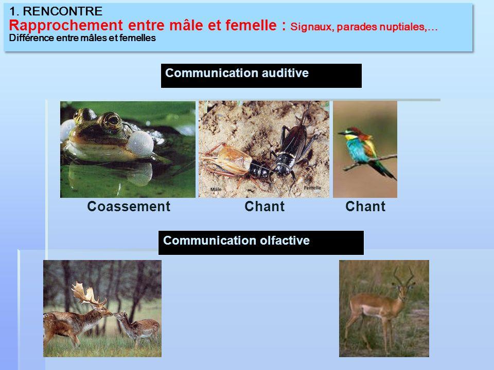 Pour quil y ait reproduction sexuée entre deux organismes, il faut: Que les organismes soient de la même espèce Que les organismes soient de la même espèce Quil y ait un mâle et une femelle Quil y ait un mâle et une femelle Que le mâle produise des gamètes (spermatozoïdes ) Que le mâle produise des gamètes (spermatozoïdes )