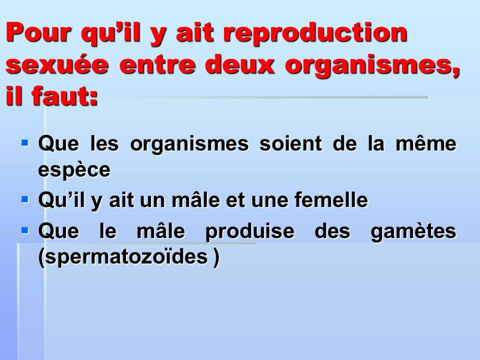 Pour quil y ait reproduction sexuée entre deux organismes, il faut: Que les organismes soient de la même espèce Que les organismes soient de la même e