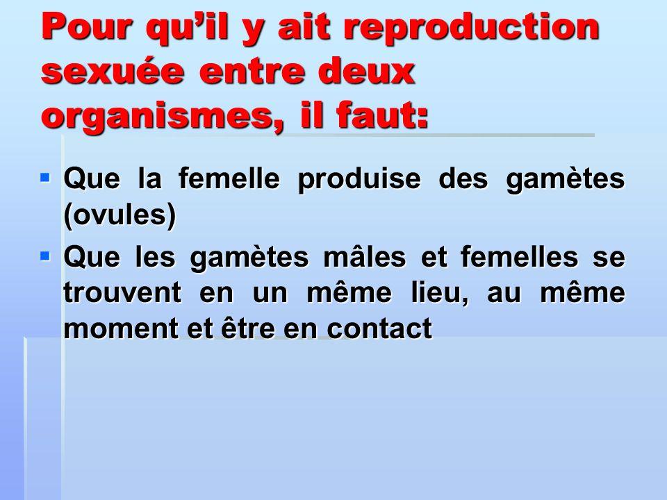 Que la femelle produise des gamètes (ovules) Que la femelle produise des gamètes (ovules) Que les gamètes mâles et femelles se trouvent en un même lie
