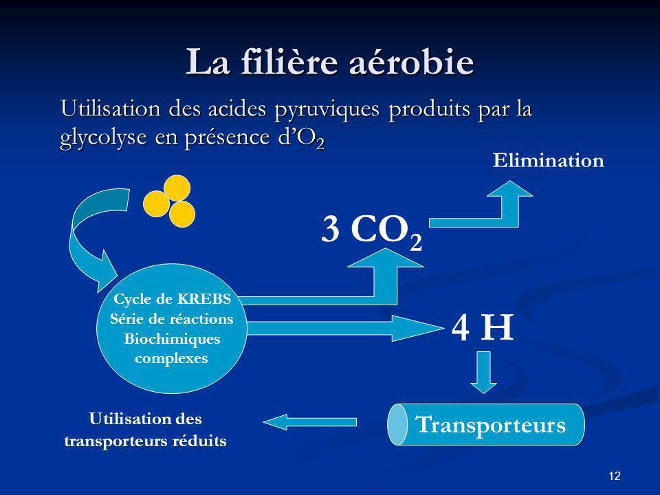 12 La filière aérobie Utilisation des acides pyruviques produits par la glycolyse en présence dO 2 Cycle de KREBS Série de réactions Biochimiques comp