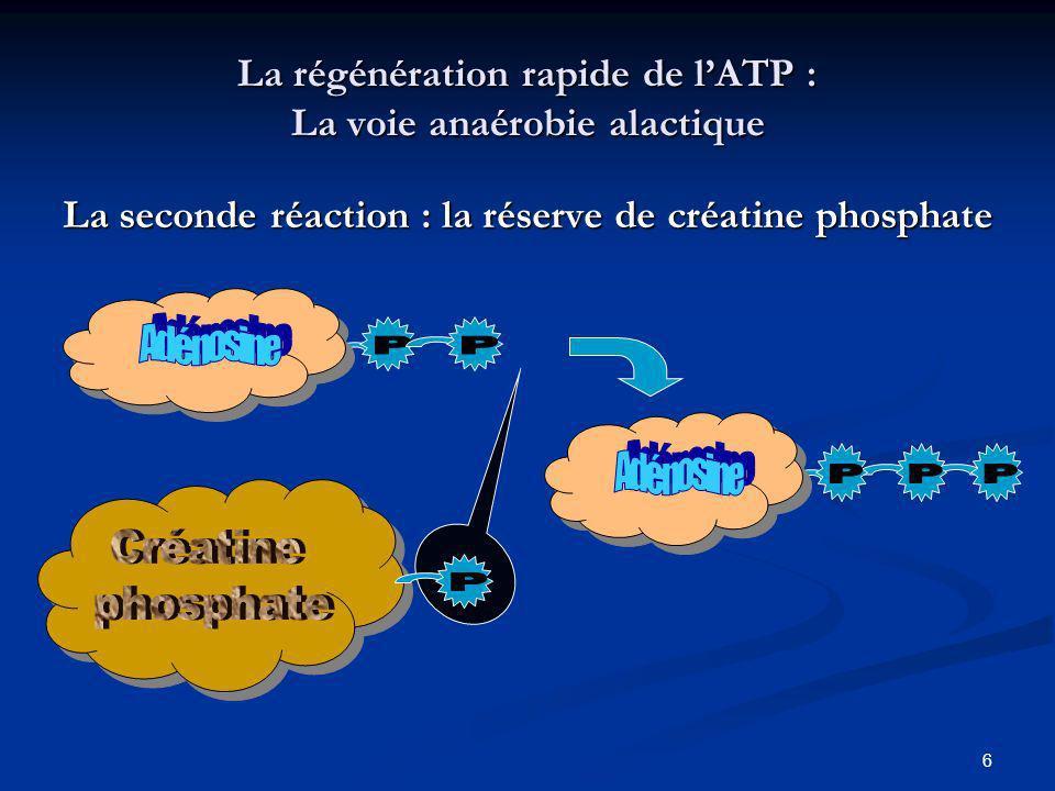 7 Les caractéristiques de la filière anaérobie alactique Délai Immédiat PuissanceMaximale Capacité Faible (20 s maxi) Rendement ~40 % Facteur limitant Réserves en ATP et en Créatine phosphate