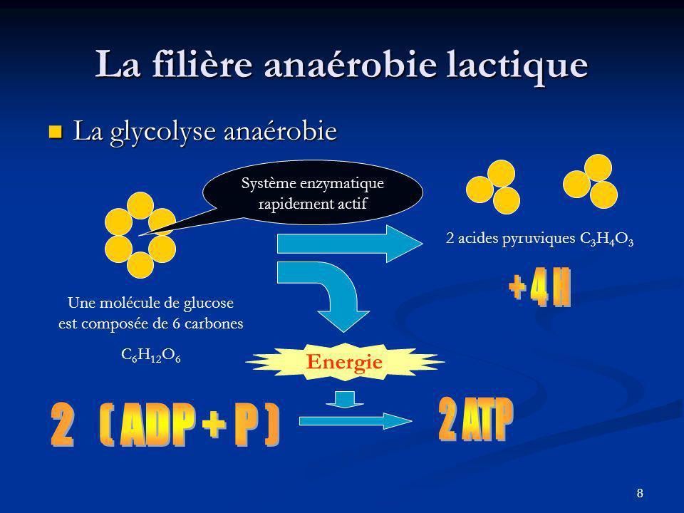 9 La filière anaérobie lactique La fermentation lactique 2 acides pyruviques C 3 H 4 O 3 2 acides lactiques : C 3 H 6 O 3 Sans utilisation d O 2 Se transforme en lactate dans le muscle